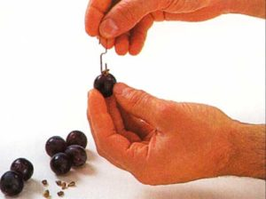 How-to-Deseed-Grapes-To-deseed-with-a-paper-clip-To-deseed-with-a-knife