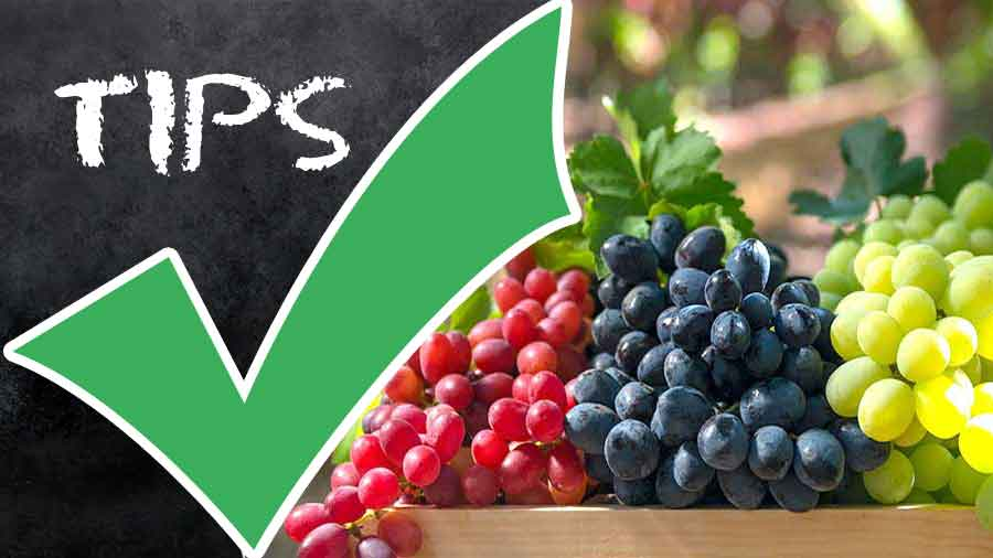 How To Choose Store How To Use Grapes Benefits Of Grapes Calories And Nutrition Facts Recipematic