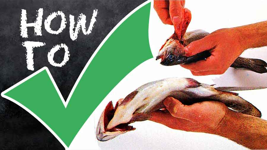 How-to-Clean-a-Whole-Fish-Through-the-Gills-tips-step-by-step