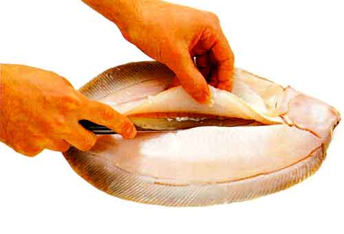 How-to-Fillet-a-Flatfish-tips-How-to-Fillet-a-Fish-step-5