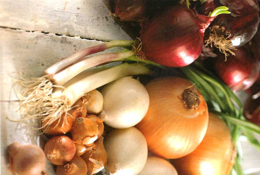 How to Choose-How to Store-How to Use Onions-How to Cook Onions-Nutrients and Calories in onion