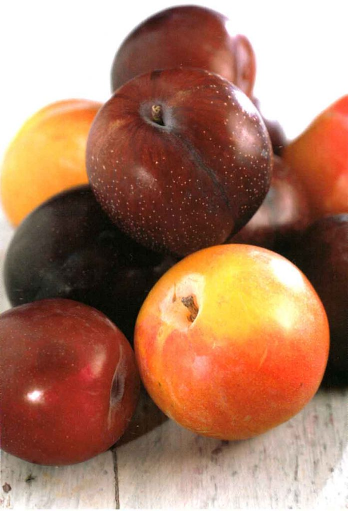 How to Choose Plums-Benefits of Plums and How to Store Plum-How to Store Plum-calories-nutrition facts